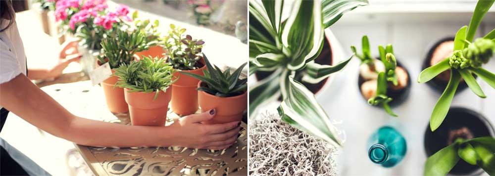 Cuida tus plantas con suero de kéfir