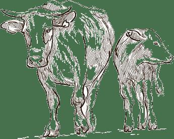 Cómo crece el kéfir de leche